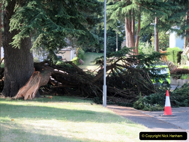 2019-07-28 Tree Break. (1) 062
