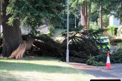 2019-07-28 Tree Break. (1) 062