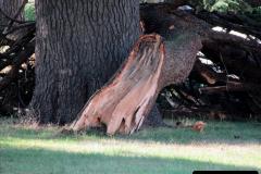 2019-07-28 Tree Break. (2) 063