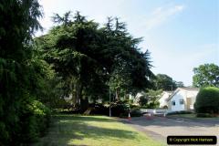 2019-07-28 Tree Break. (7) 068