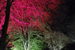 2019-12 20 Kingston Lacy (NT) Wimborne, Dorset Christmas Lights. (101) 101