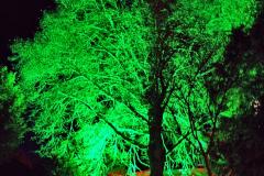 2019-12 20 Kingston Lacy (NT) Wimborne, Dorset Christmas Lights. (102) 102