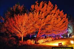 2019-12 20 Kingston Lacy (NT) Wimborne, Dorset Christmas Lights. (61) 061
