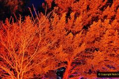2019-12 20 Kingston Lacy (NT) Wimborne, Dorset Christmas Lights. (62) 062