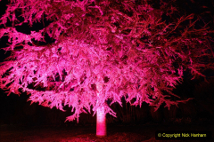 2019-12 20 Kingston Lacy (NT) Wimborne, Dorset Christmas Lights. (65) 065