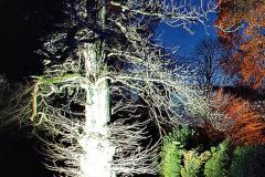 2019-12 20 Kingston Lacy (NT) Wimborne, Dorset Christmas Lights. (74) 074