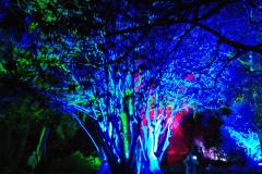 2019-12 20 Kingston Lacy (NT) Wimborne, Dorset Christmas Lights. (86) 086
