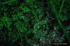 2019-12 20 Kingston Lacy (NT) Wimborne, Dorset Christmas Lights. (88) 088