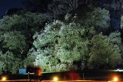 2019-12 20 Kingston Lacy (NT) Wimborne, Dorset Christmas Lights. (93) 093