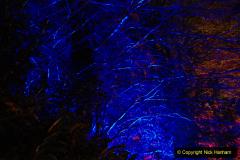 2019-12 20 Kingston Lacy (NT) Wimborne, Dorset Christmas Lights. (98) 098