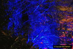 2019-12 20 Kingston Lacy (NT) Wimborne, Dorset Christmas Lights. (99) 099