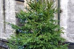 2019-12-21 St. Aldhelms Church Christmas Trees. (3) 003
