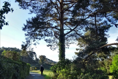 2020-05-04 Covid 19 walk Parkstone Golf Club Poole, Dorset.  (15) 015