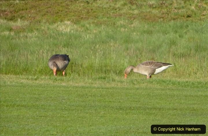 2020 May 07 Covid 19 Walk around Parkstone Golf Club third time (13) 013