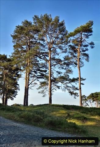 2020 May 07 Covid 19 Walk around Parkstone Golf Club third time (20) 020