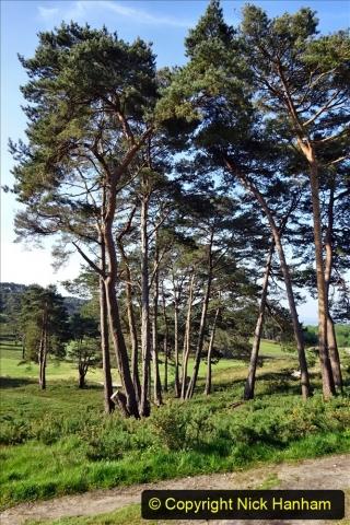 2020 May 07 Covid 19 Walk around Parkstone Golf Club third time (26) 026