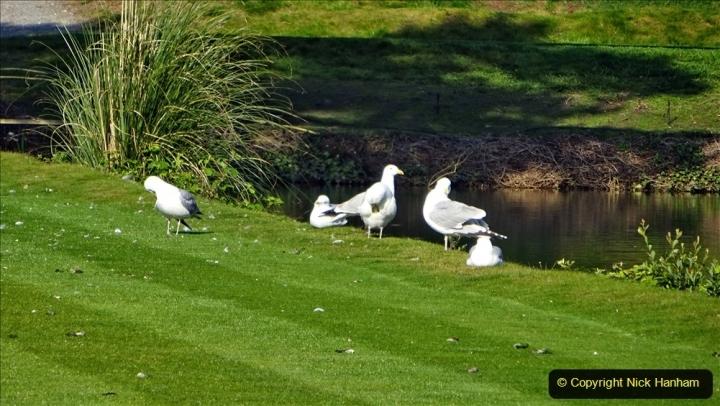 2020 May 07 Covid 19 Walk around Parkstone Golf Club third time (35) 035