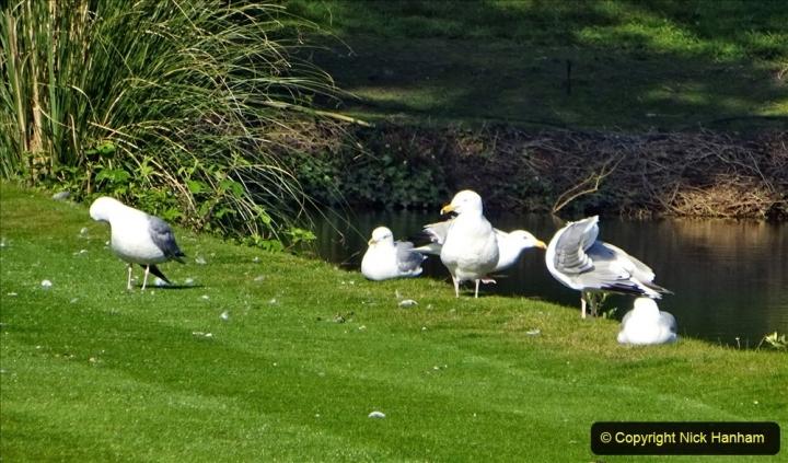 2020 May 07 Covid 19 Walk around Parkstone Golf Club third time (36) 036