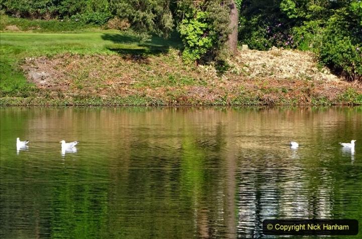 2020 May 07 Covid 19 Walk around Parkstone Golf Club third time (37) 037