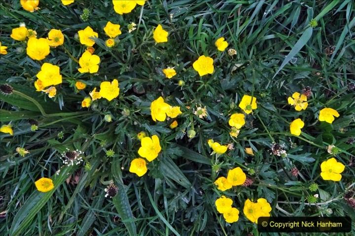 2020 05 10 Covid 19 walk Lilliput Evening Hill Luscombe Vale (14) 014