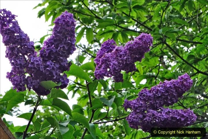 2020 05 10 Covid 19 walk Lilliput Evening Hill Luscombe Vale (26) 026
