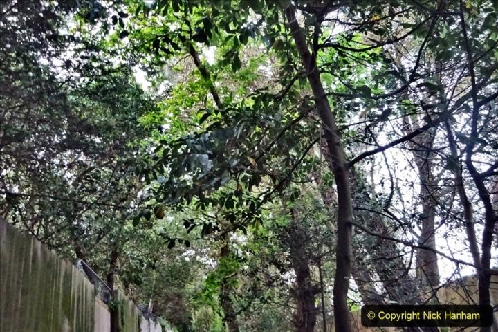 2020 05 10 Covid 19 walk Lilliput Evening Hill Luscombe Vale (32) 032