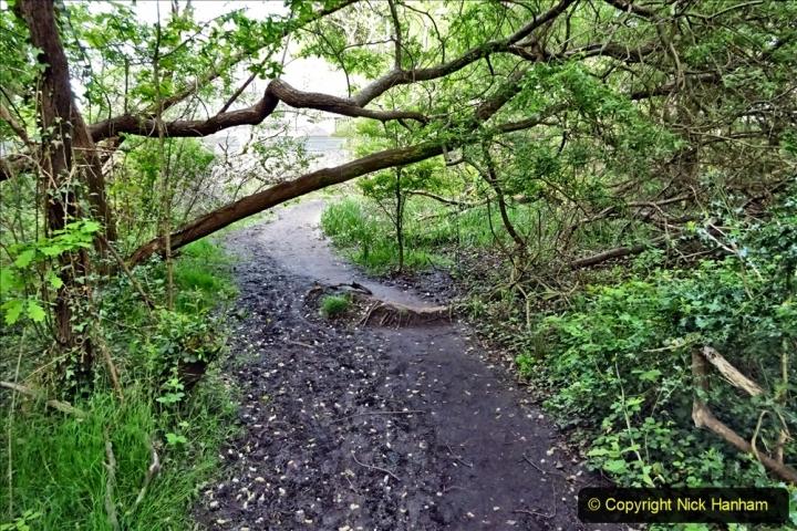 2020 05 10 Covid 19 walk Lilliput Evening Hill Luscombe Vale (49) 049