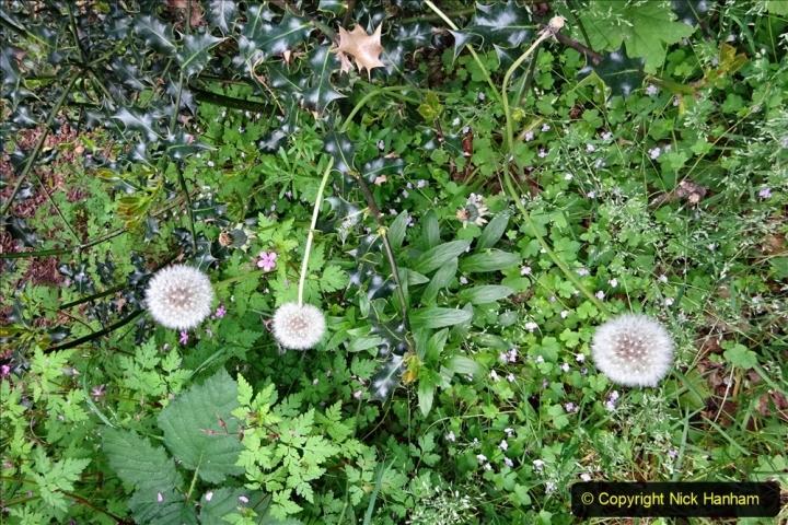 2020 05 10 Covid 19 walk Lilliput Evening Hill Luscombe Vale (5) 005
