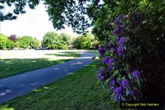 2020-05-18 Covid 19 Walks Circumnavigation of Poole Park, Poole, Dorset. (19) 019