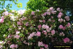 2020-05-18 Covid 19 Walks Circumnavigation of Poole Park, Poole, Dorset. (40) 040