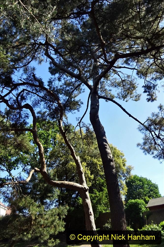 2020_05_26 Covid 19 Walk Alexandra Park, Parkstone, Poole, Dorset. (37) 037