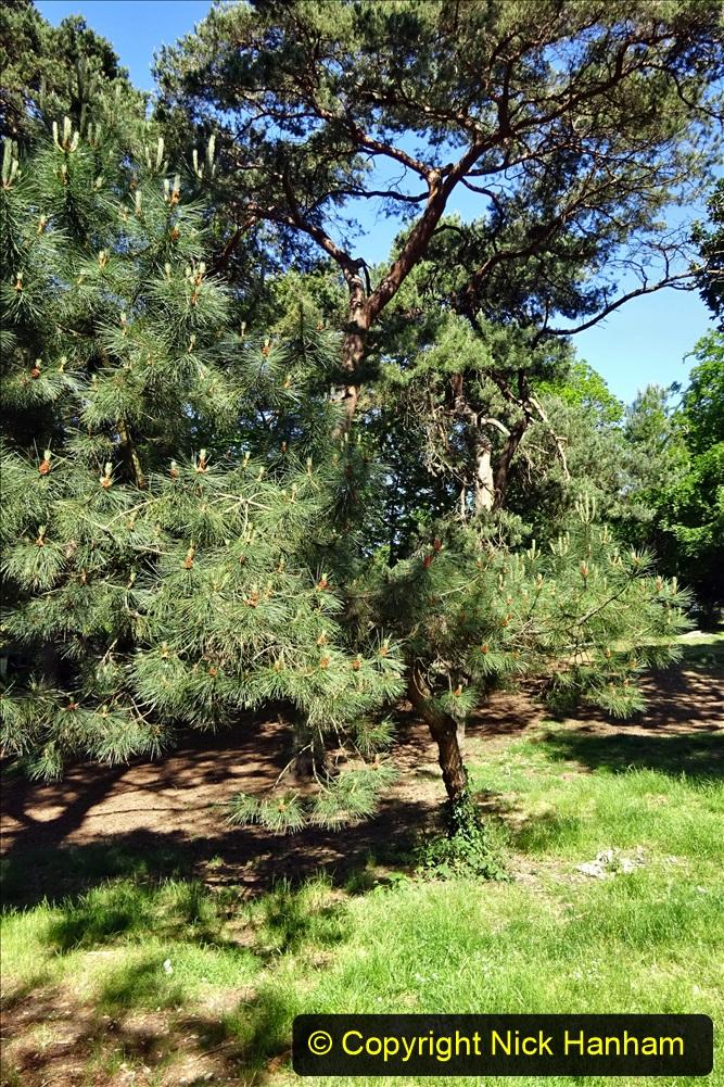 2020_05_26 Covid 19 Walk Alexandra Park, Parkstone, Poole, Dorset. (38) 038
