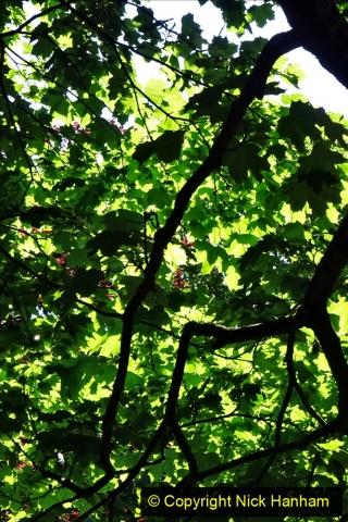 2020_05_26 Covid 19 Walk Alexandra Park, Parkstone, Poole, Dorset. (54) 054