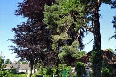 2020_05_26 Covid 19 Walk Alexandra Park, Parkstone, Poole, Dorset. (35) 035