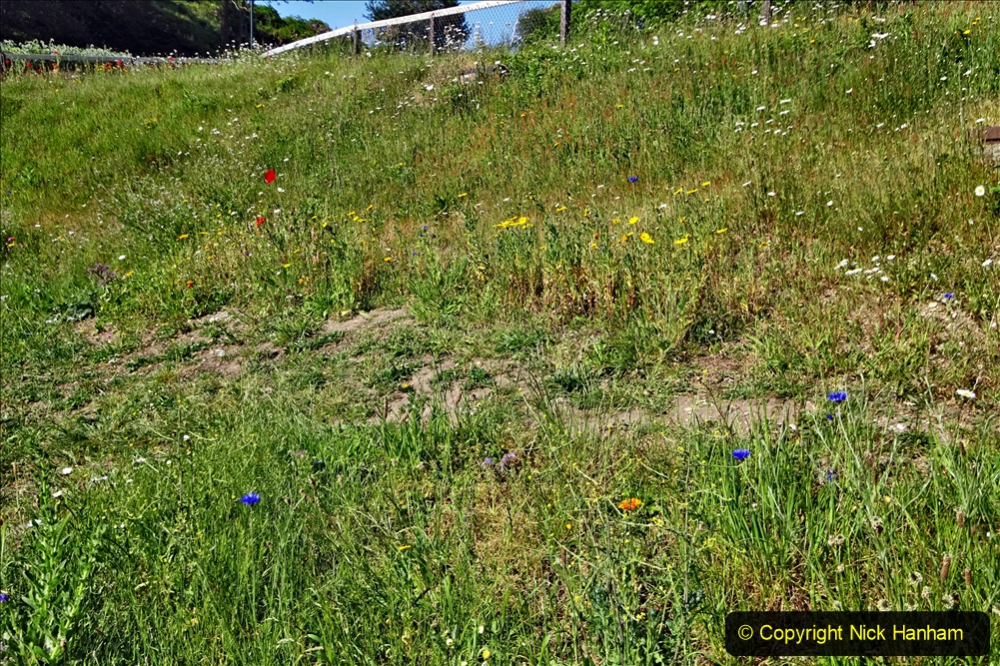 2020-05-27 Covid 19 Walks Alum Chine - Robert Louis Stevenson - View Point - Parkstone Heights. (47) 047
