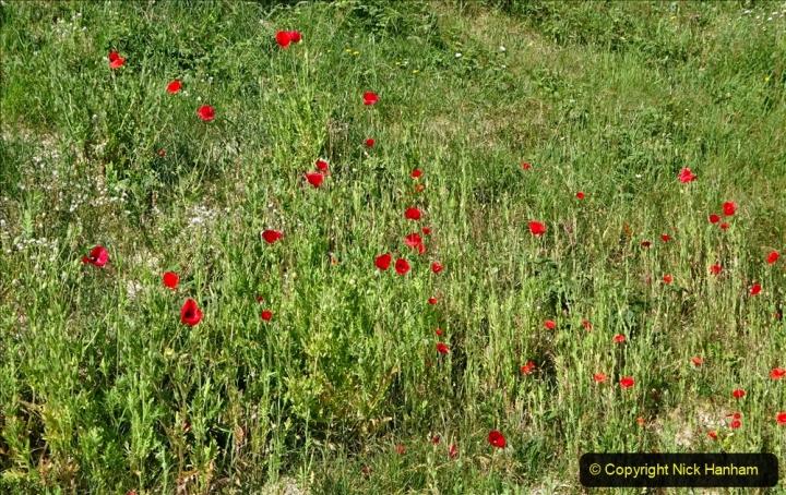2020-05-27 Covid 19 Walks Alum Chine - Robert Louis Stevenson - View Point - Parkstone Heights. (57) 057