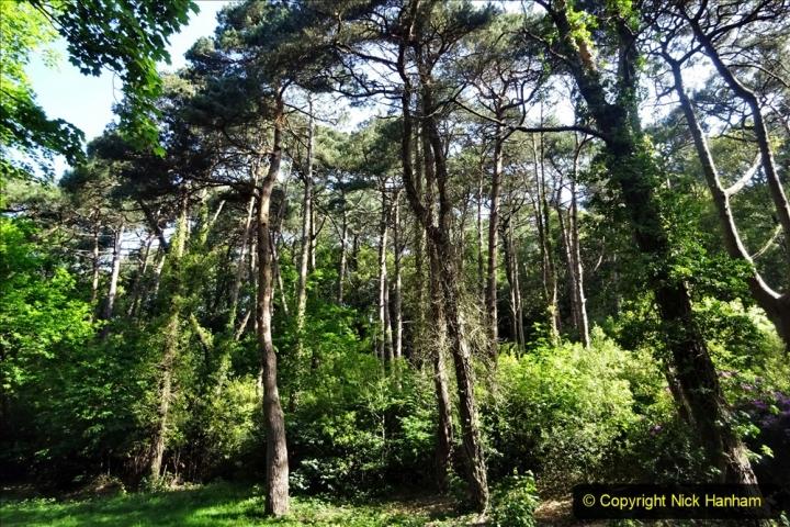 2020-05-27 Covid 19 Walks Alum Chine - Robert Louis Stevenson - View Point - Parkstone Heights. (63) 063