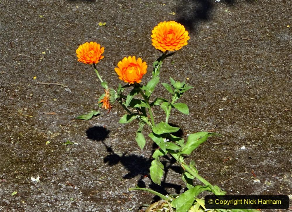 2020-05-27 Covid 19 Walks Alum Chine - Robert Louis Stevenson - View Point - Parkstone Heights. (84) 084