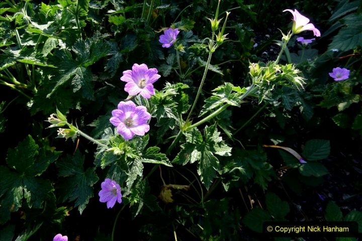 2020-05-27 Covid 19 Walks Alum Chine - Robert Louis Stevenson - View Point - Parkstone Heights. (89) 089