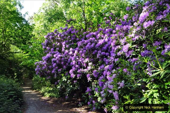 2020-05-28 Covid 19 Walk Branksome, Poole Dorset to Branksome Chine sea front. (13) 001