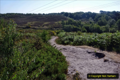 2020-05-30 Covid 19 Walk Coy Pond to Talbot Heath and area. (39) 039