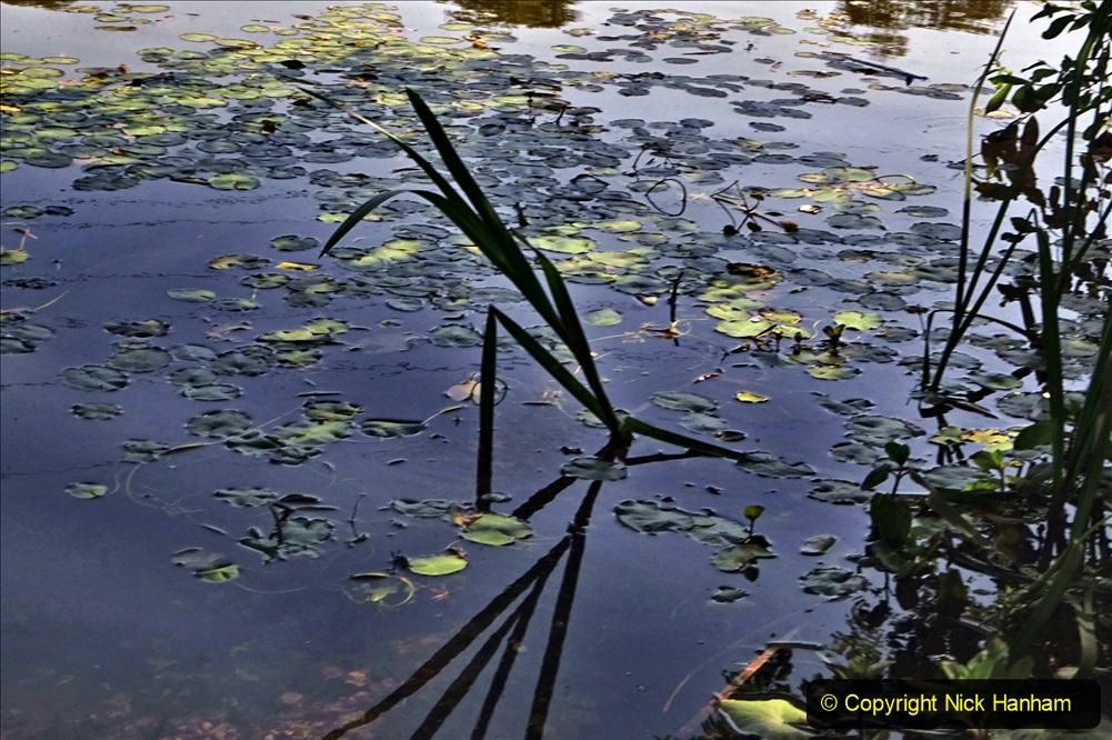 2020-05-31 Covid 19 Walk Alder Hills Nature Reserve Poole, Dorset. (12) 012