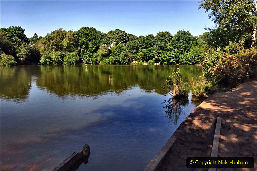 2020-05-31 Covid 19 Walk Alder Hills Nature Reserve Poole, Dorset. (27) 027