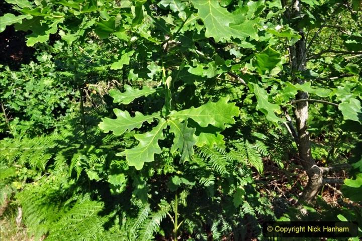 2020-05-31 Covid 19 Walk Alder Hills Nature Reserve Poole, Dorset. (32) 032