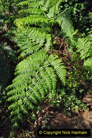 2020-05-31 Covid 19 Walk Alder Hills Nature Reserve Poole, Dorset. (33) 033