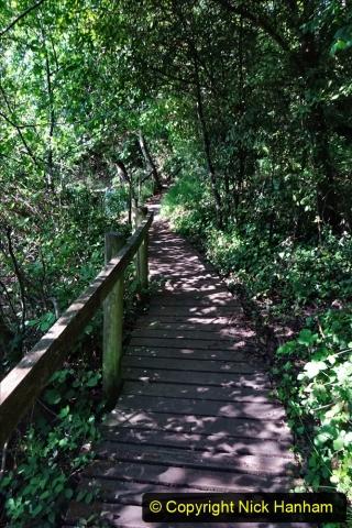 2020-05-31 Covid 19 Walk Alder Hills Nature Reserve Poole, Dorset. (7) 007