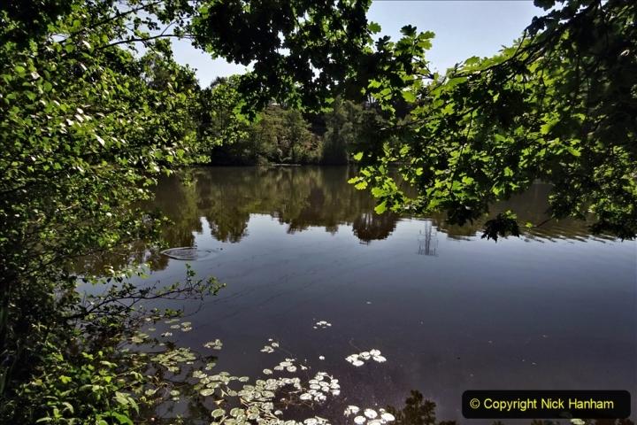 2020-05-31 Covid 19 Walk Alder Hills Nature Reserve Poole, Dorset. (8) 008