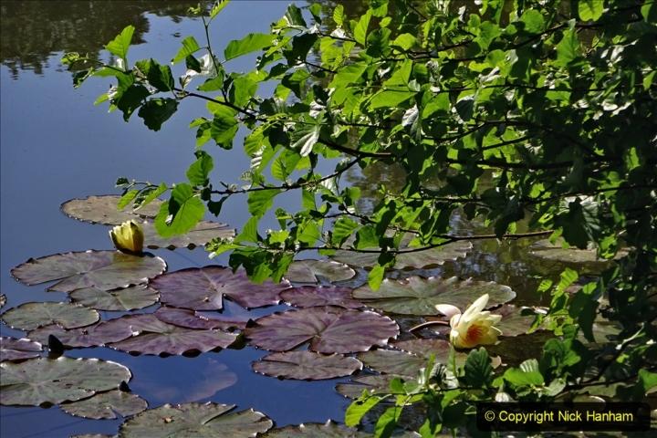 2020-05-31 Covid 19 Walk Alder Hills Nature Reserve Poole, Dorset. (9) 009