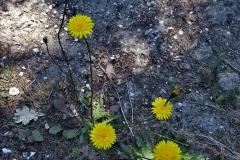 2020-05-31 Covid 19 Walk Alder Hills Nature Reserve Poole, Dorset. (10) 010