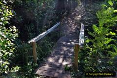 2020-05-31 Covid 19 Walk Alder Hills Nature Reserve Poole, Dorset. (16) 016